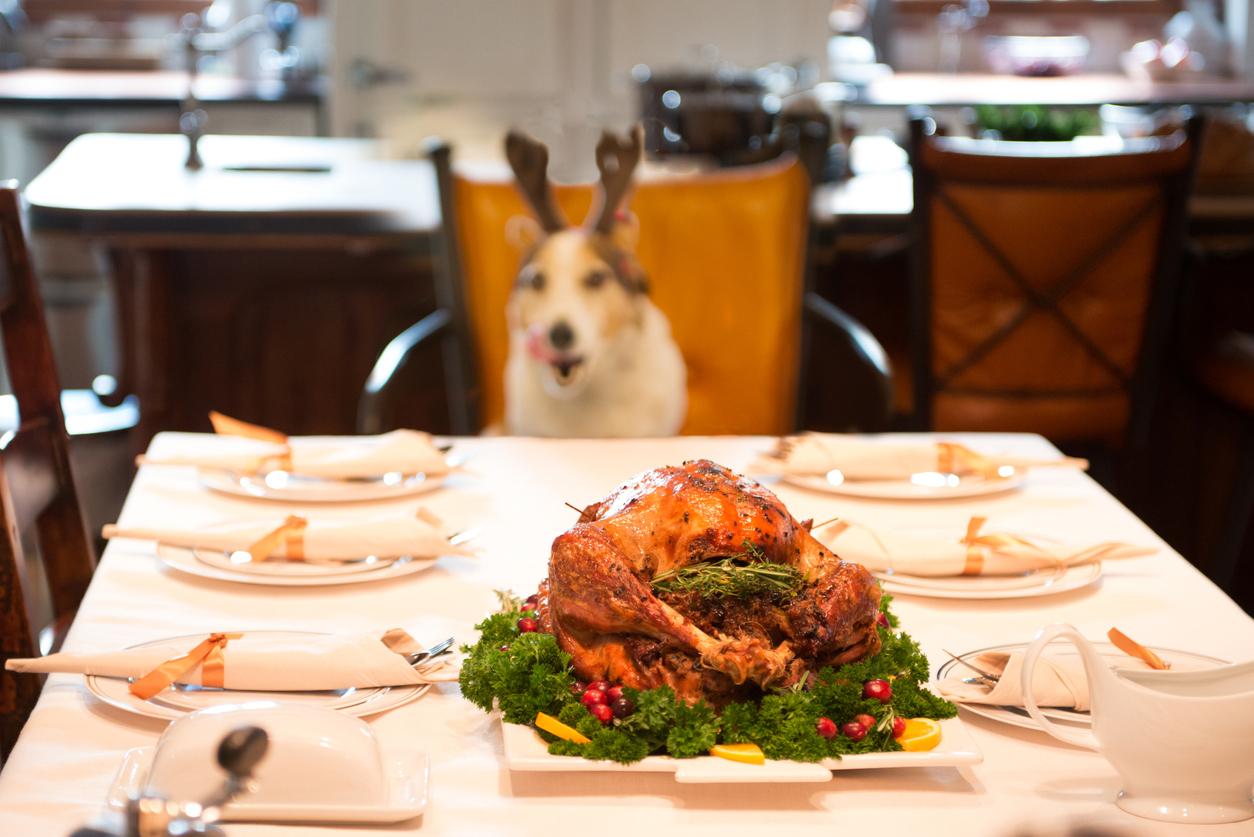 Dog friendly Christmas dinner