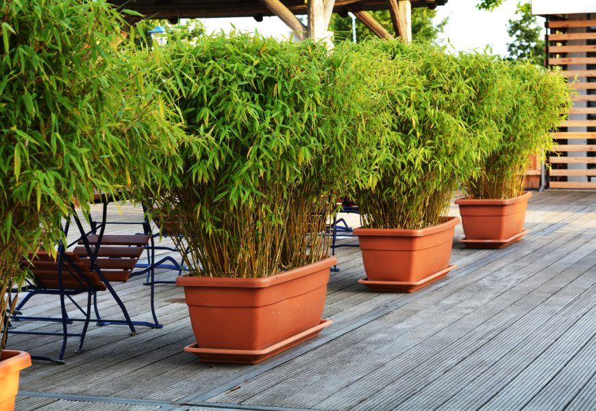 garden bamboo