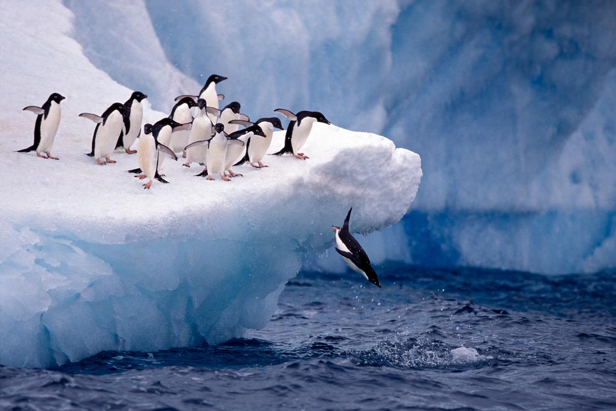 Antarctica, penguin colony