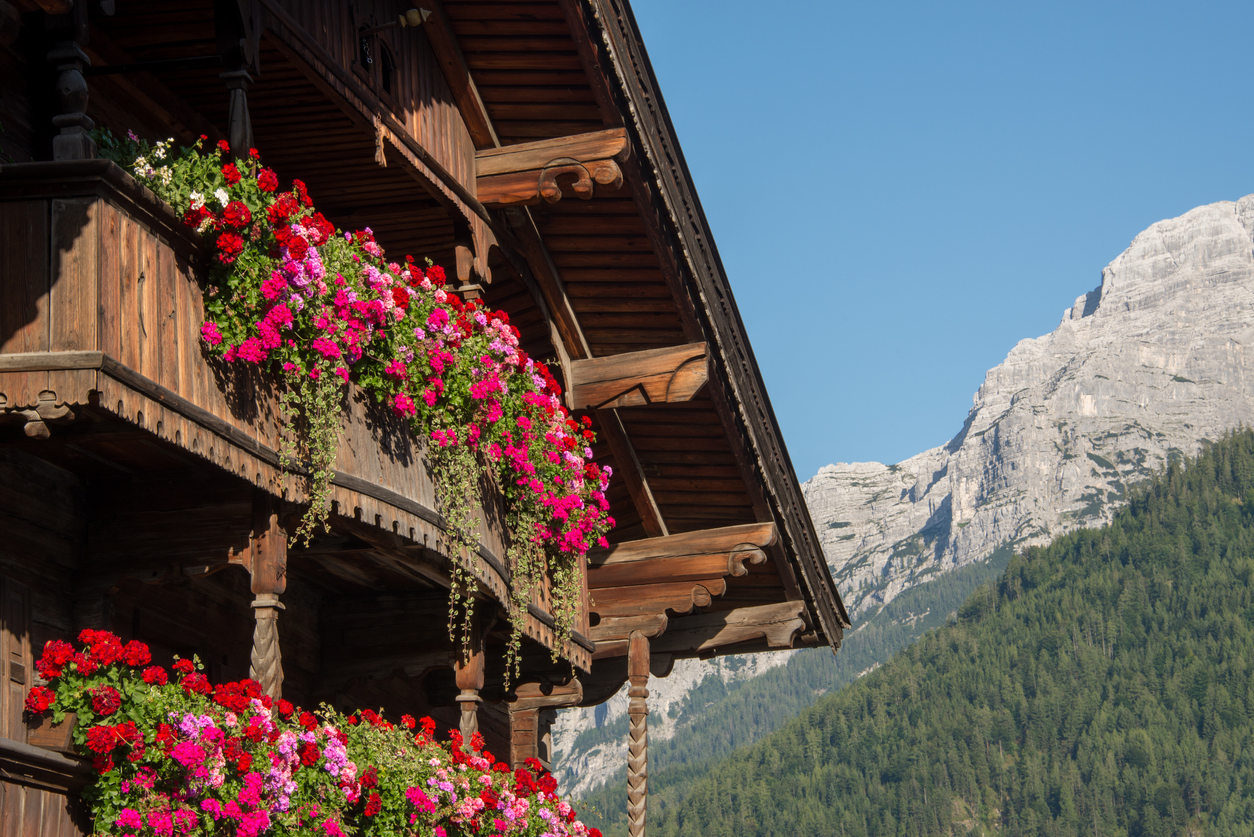 Blooming flowers in the Alps