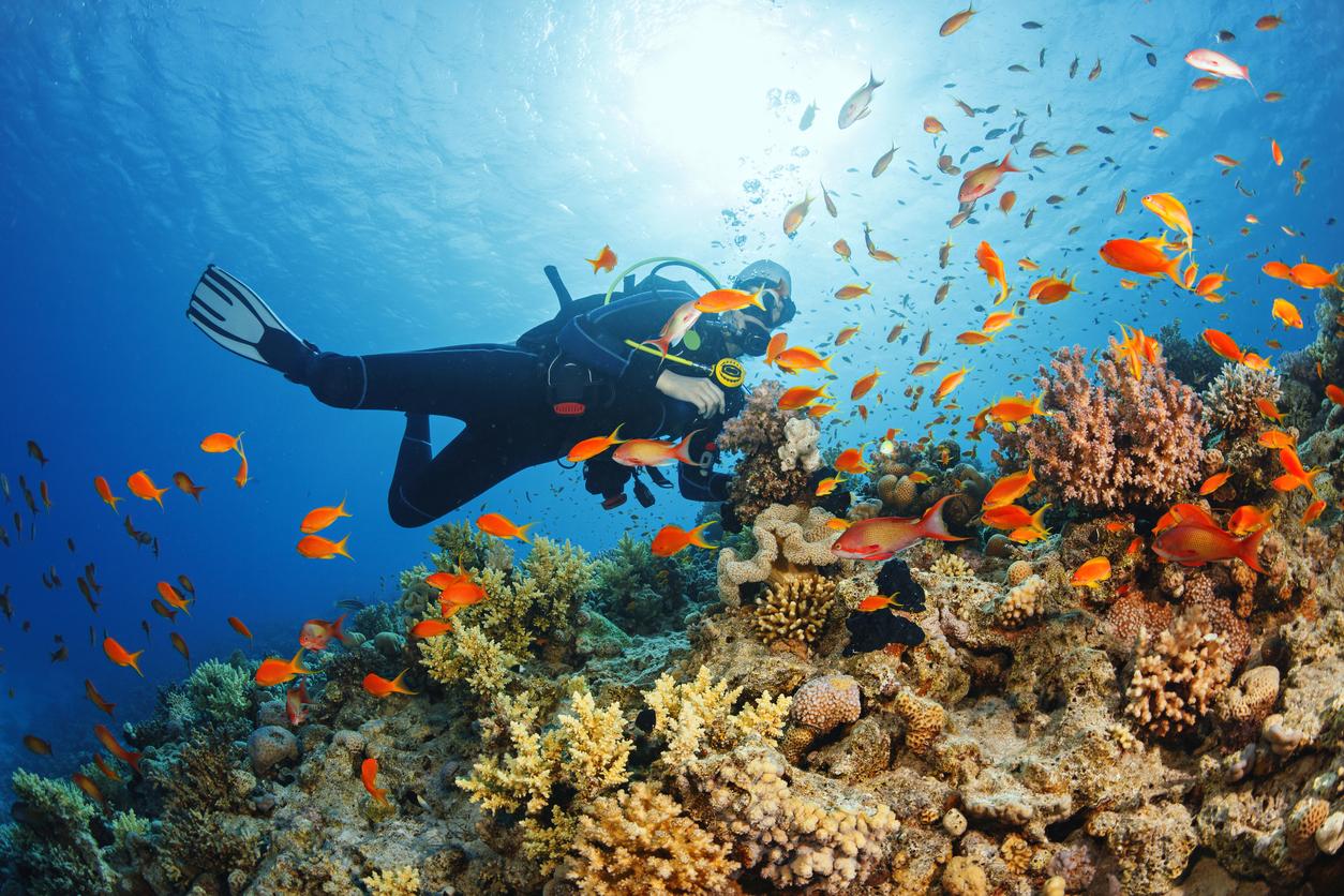 Red Sea, scuba diving