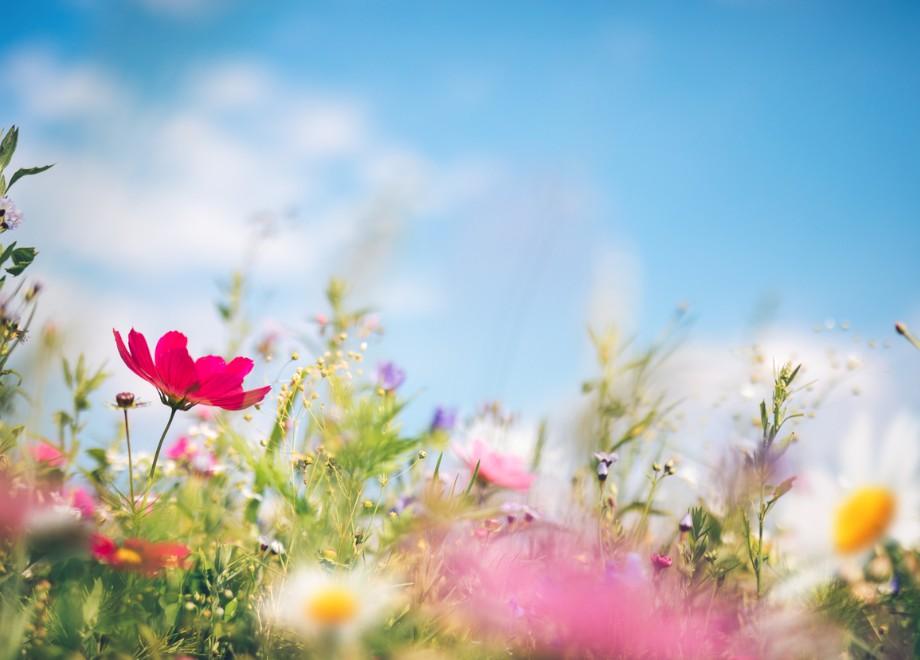wildflower haven